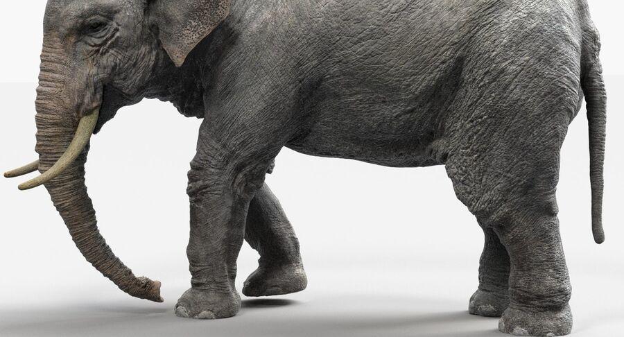 Éléphant d'Asie (gréé) royalty-free 3d model - Preview no. 13