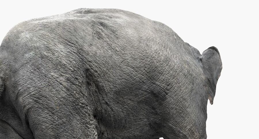 Éléphant d'Asie (gréé) royalty-free 3d model - Preview no. 11