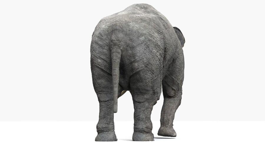 Éléphant d'Asie (gréé) royalty-free 3d model - Preview no. 14