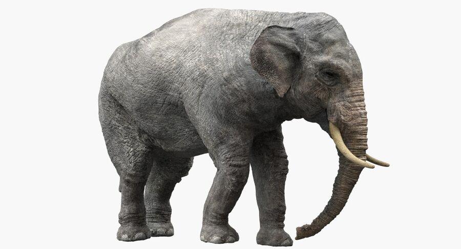 Éléphant d'Asie (gréé) royalty-free 3d model - Preview no. 6