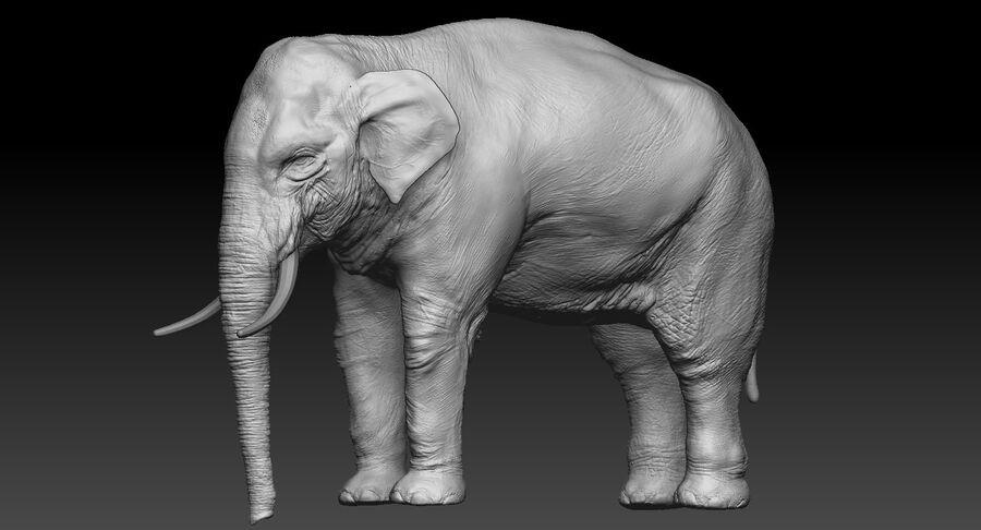 Éléphant d'Asie (gréé) royalty-free 3d model - Preview no. 18