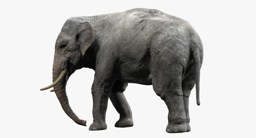 Éléphant d'Asie (gréé) royalty-free 3d model - Preview no. 2