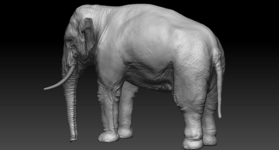 Éléphant d'Asie (gréé) royalty-free 3d model - Preview no. 19