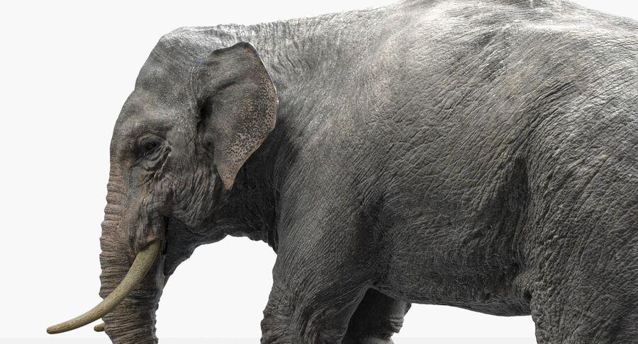 Éléphant d'Asie (gréé) royalty-free 3d model - Preview no. 4