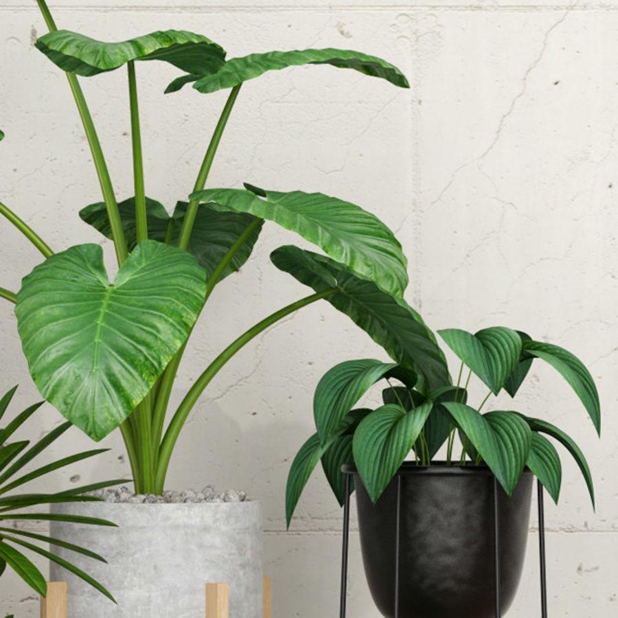 植物27 royalty-free 3d model - Preview no. 3