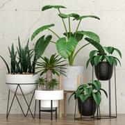 roślina 27 3d model