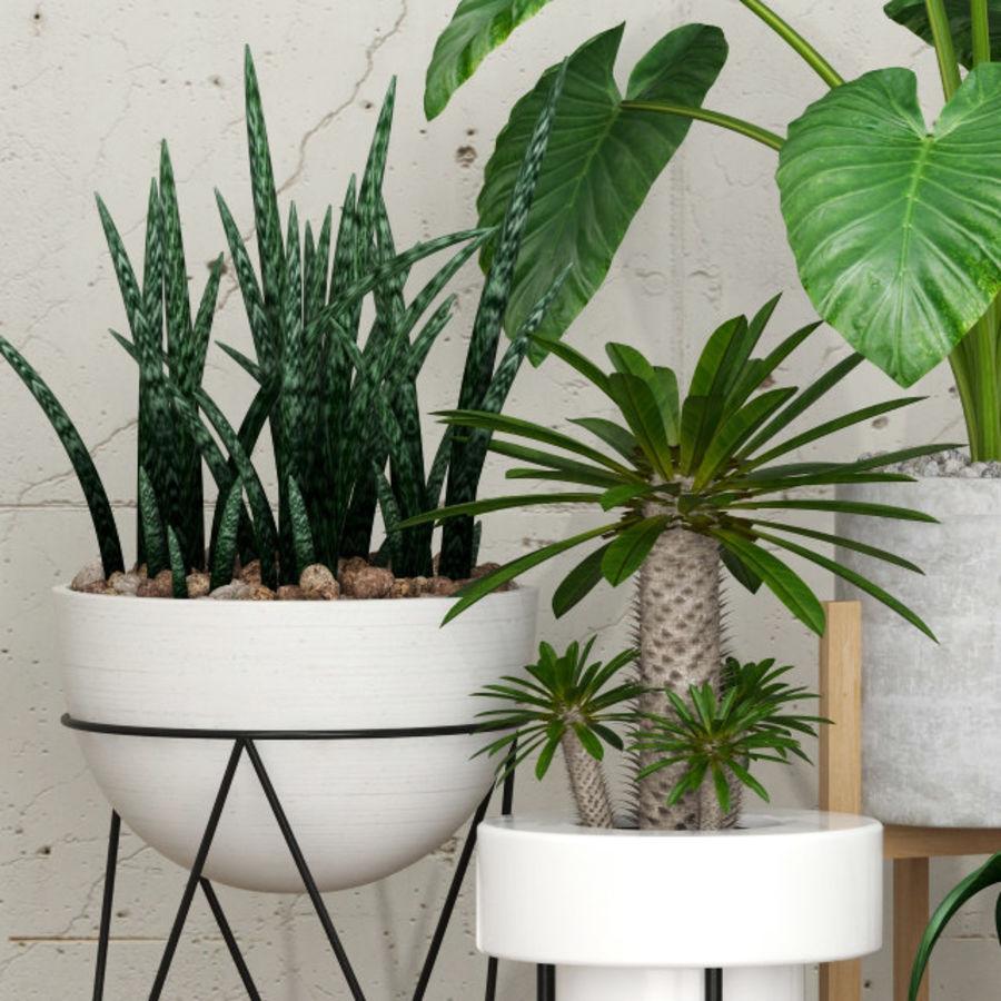 植物27 royalty-free 3d model - Preview no. 2