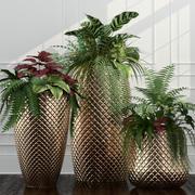 Rośliny pokojowe 11 3d model