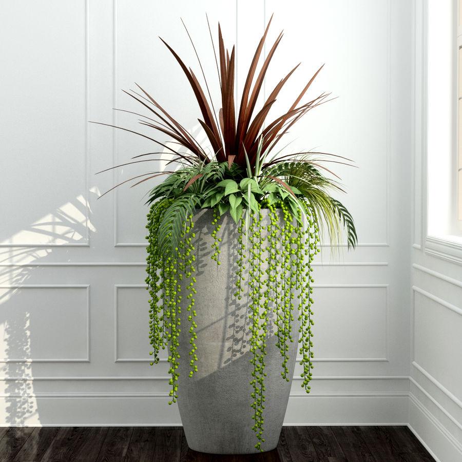 Rośliny pokojowe 12 royalty-free 3d model - Preview no. 3