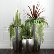 Rośliny pokojowe 12 3d model