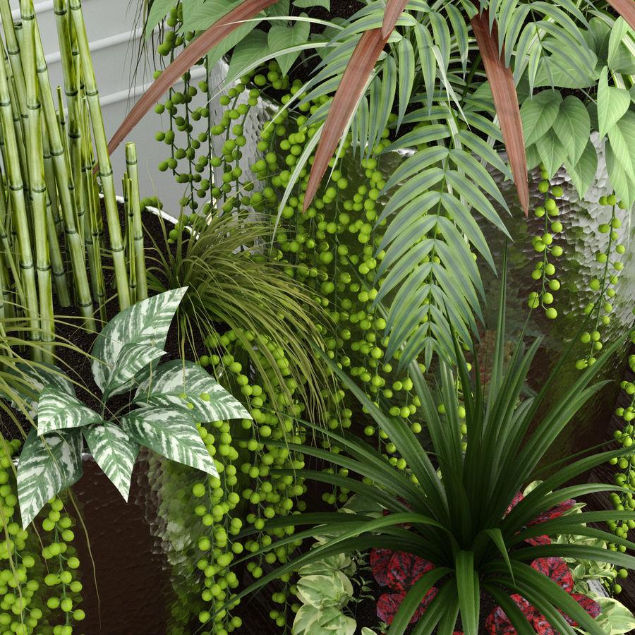 Rośliny pokojowe 12 royalty-free 3d model - Preview no. 4
