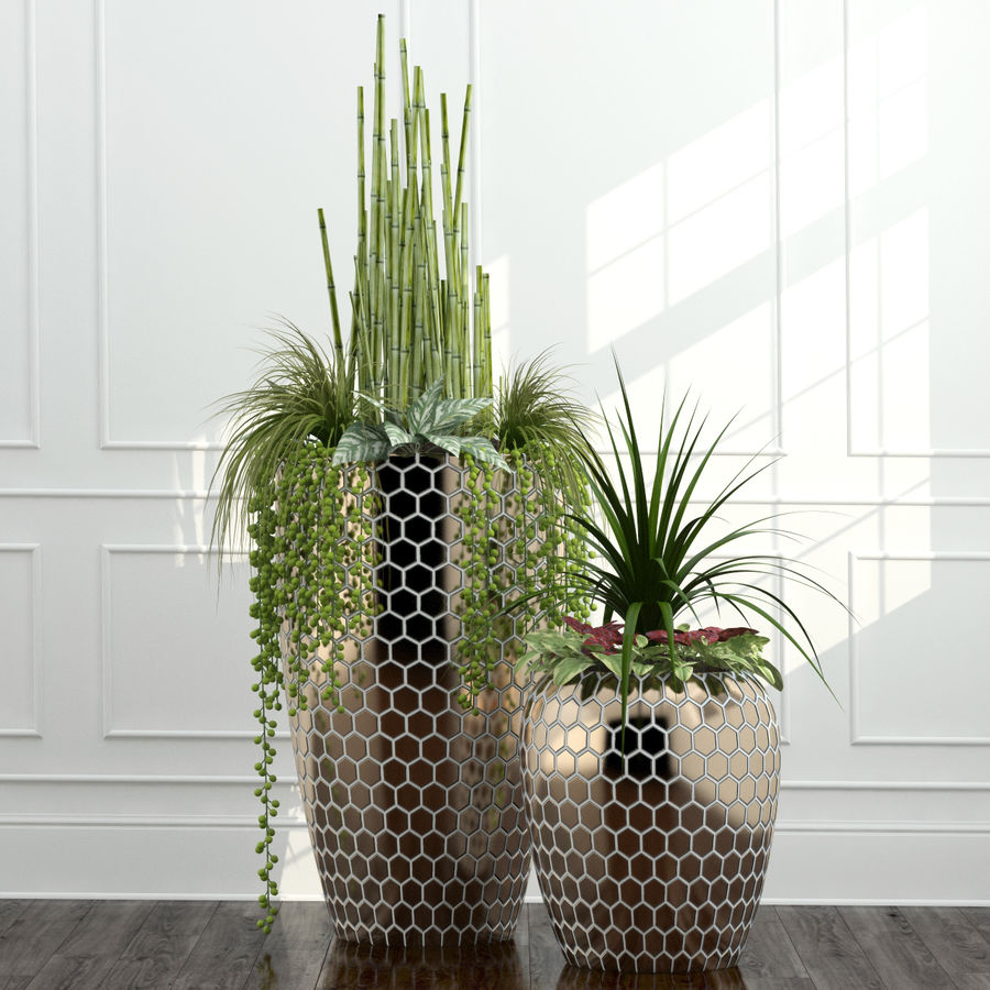 Rośliny pokojowe 12 royalty-free 3d model - Preview no. 2