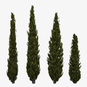 Italian Cypress 2 3d model