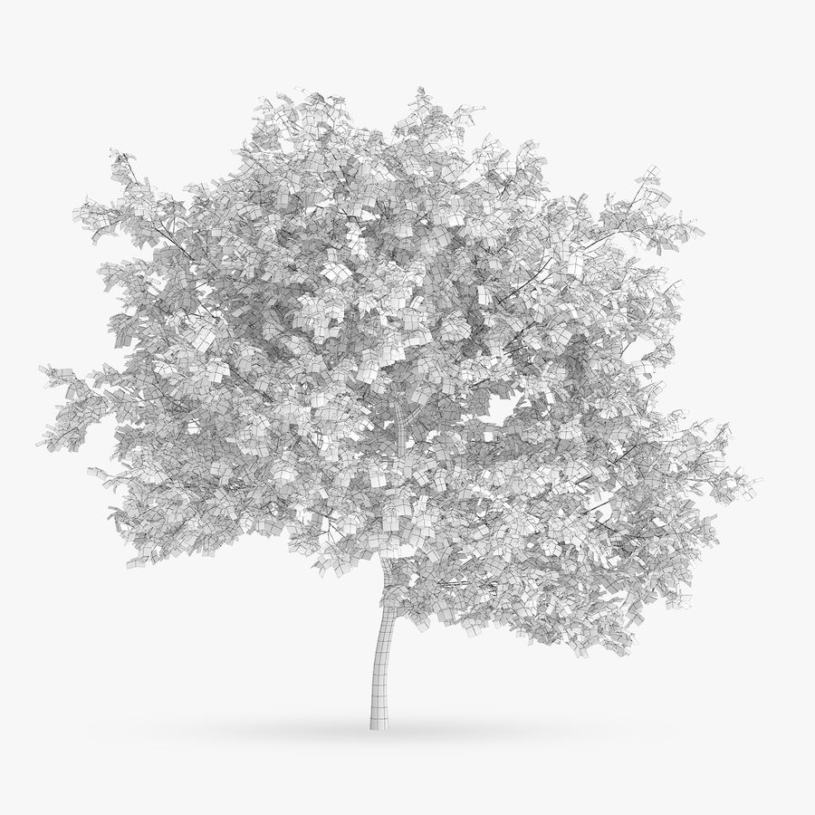 Common Hornbeam Tree 5m royalty-free 3d model - Preview no. 4