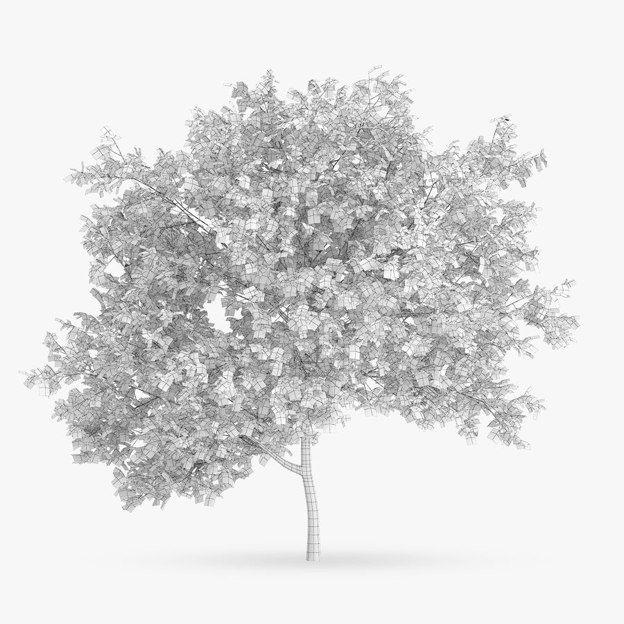 Common Hornbeam Tree 5m royalty-free 3d model - Preview no. 2