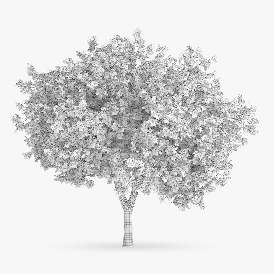 Common Hornbeam Tree 5.6m royalty-free 3d model - Preview no. 4