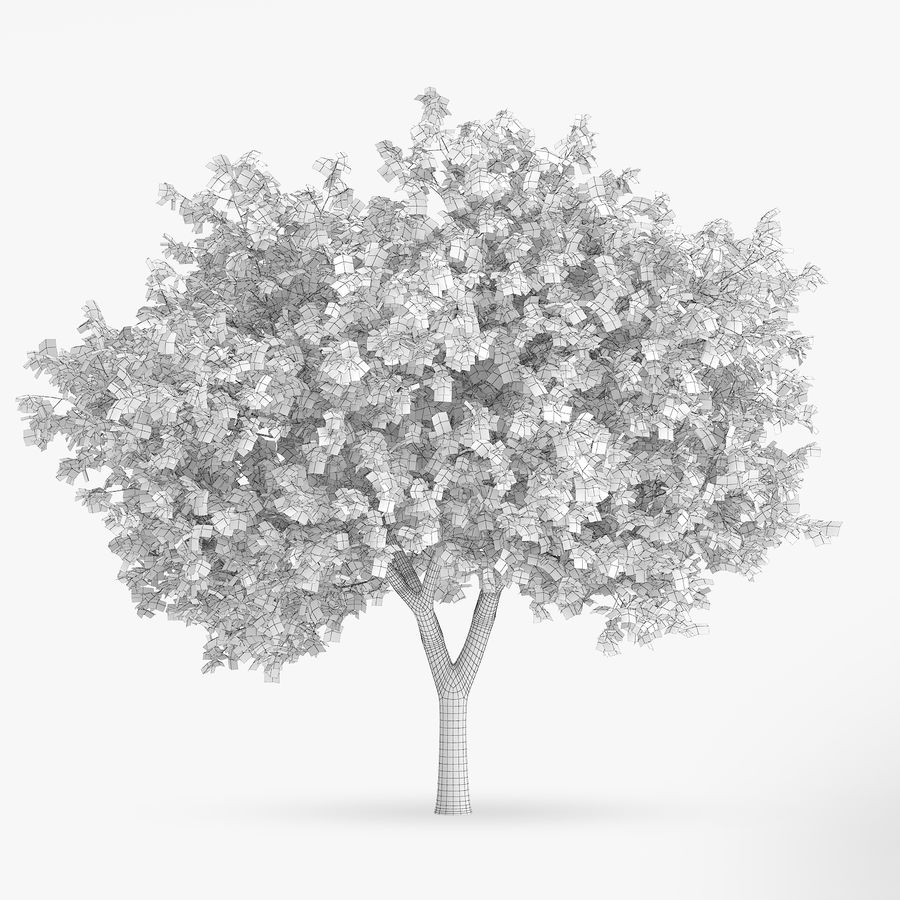 Common Hornbeam Tree 5.6m royalty-free 3d model - Preview no. 2