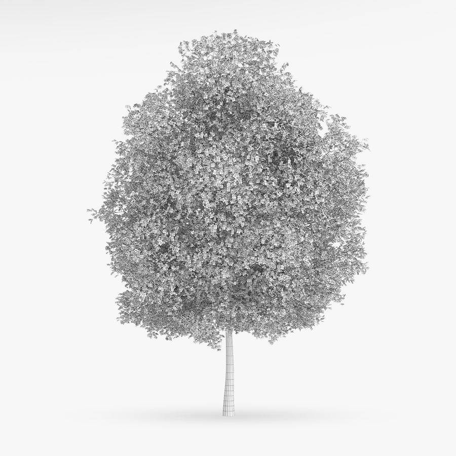 Common Hornbeam Tree 13m royalty-free 3d model - Preview no. 4