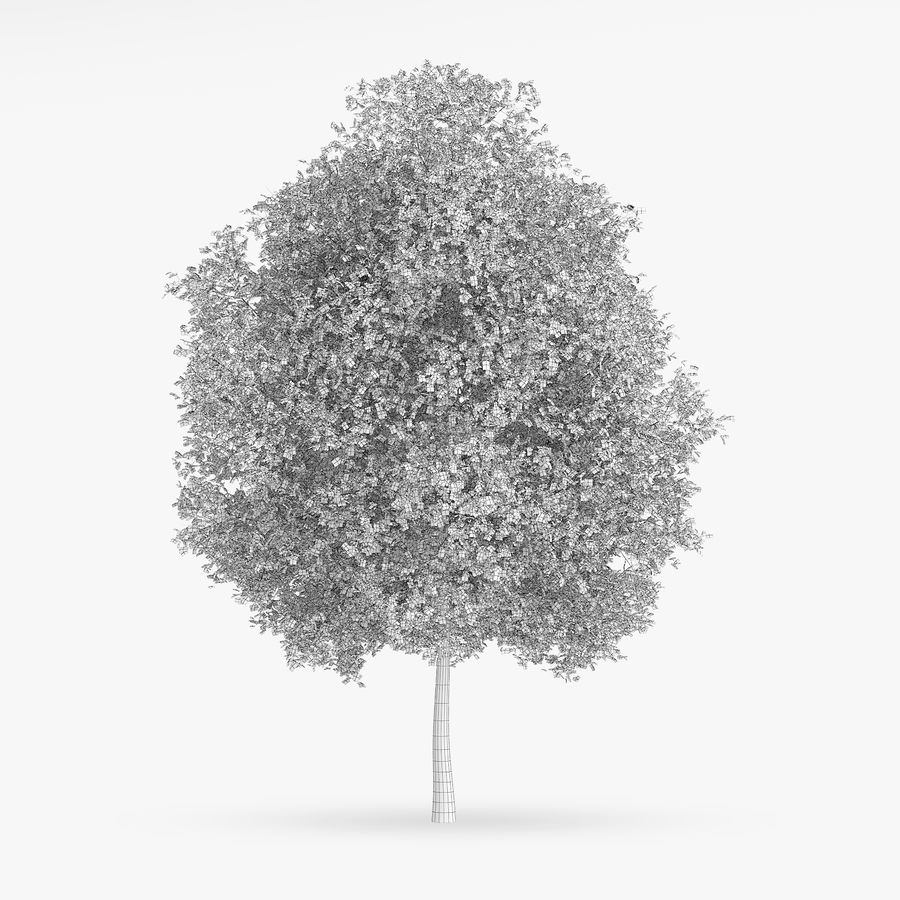 Common Hornbeam Tree 13m royalty-free 3d model - Preview no. 2