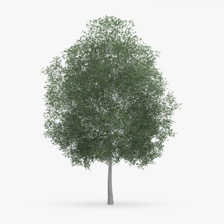 Common Hornbeam Tree 13m royalty-free 3d model - Preview no. 1