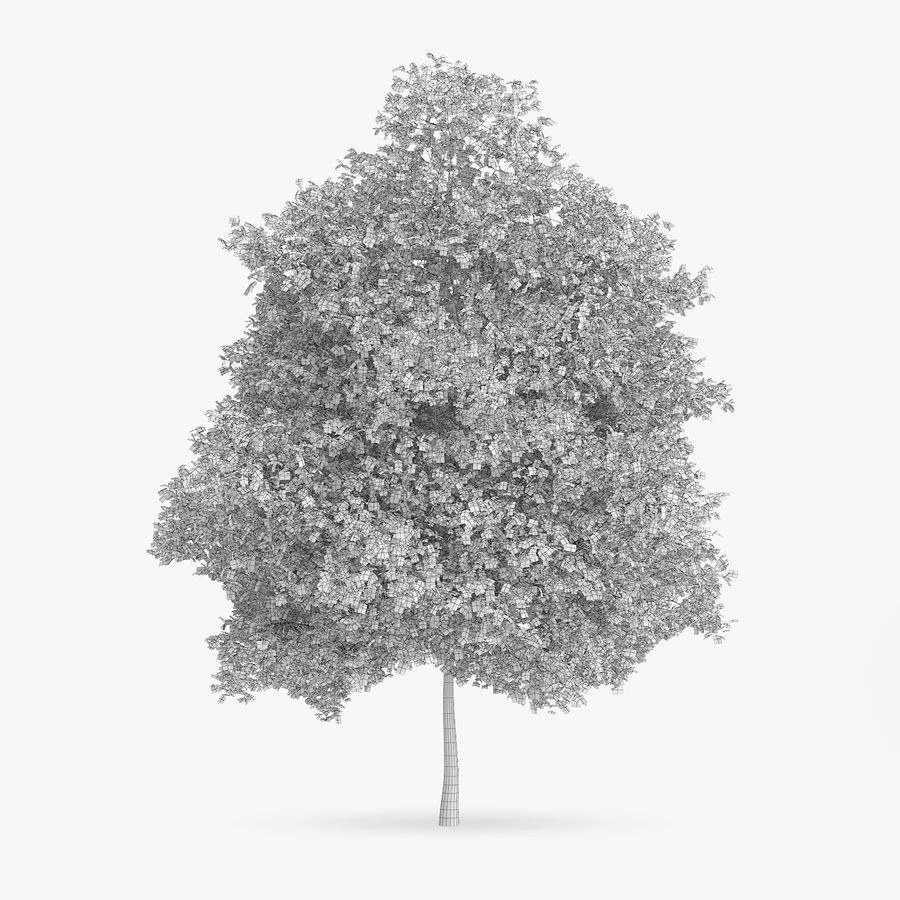 Common Hornbeam Tree 12.7m royalty-free 3d model - Preview no. 2
