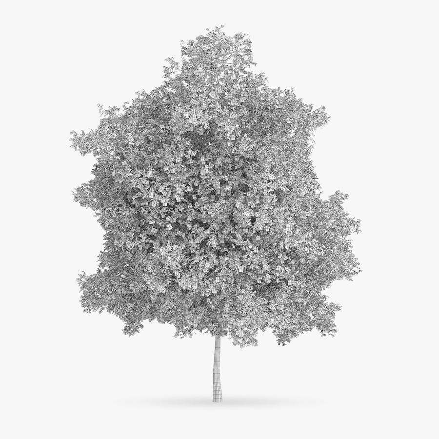 Common Hornbeam Tree 12.7m royalty-free 3d model - Preview no. 4
