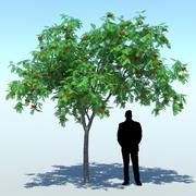 Sorbus aucuparia (Rowan tree 001) 3d model