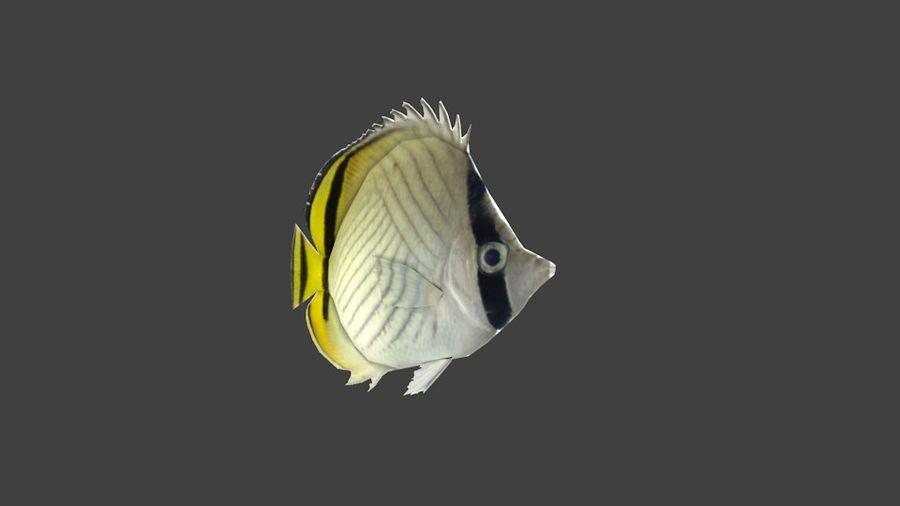 Vagabund Falterfisch royalty-free 3d model - Preview no. 3