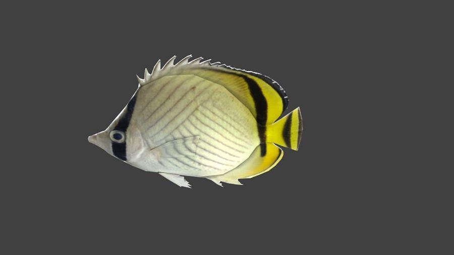 Vagabund Falterfisch royalty-free 3d model - Preview no. 1