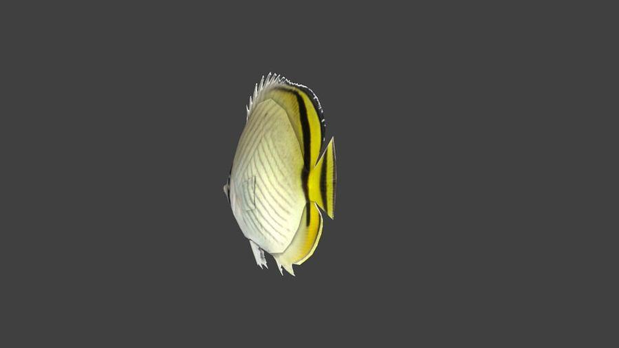 Vagabund Falterfisch royalty-free 3d model - Preview no. 5