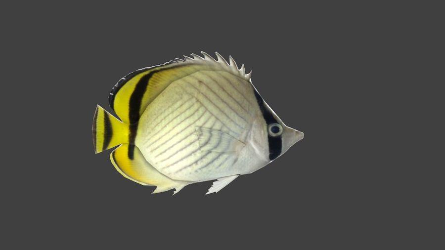 Vagabund Falterfisch royalty-free 3d model - Preview no. 2