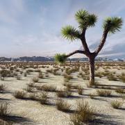 사막 풍경 3 3d model