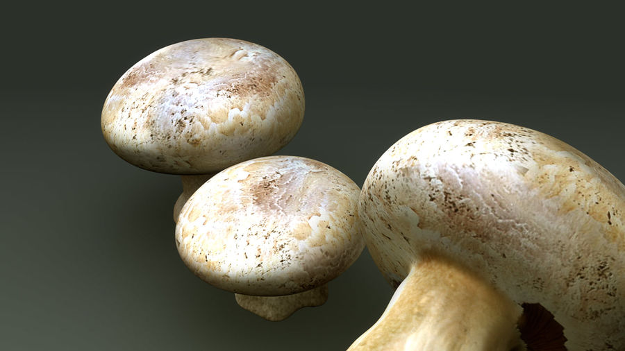 Agaricus Bisporus royalty-free 3d model - Preview no. 8