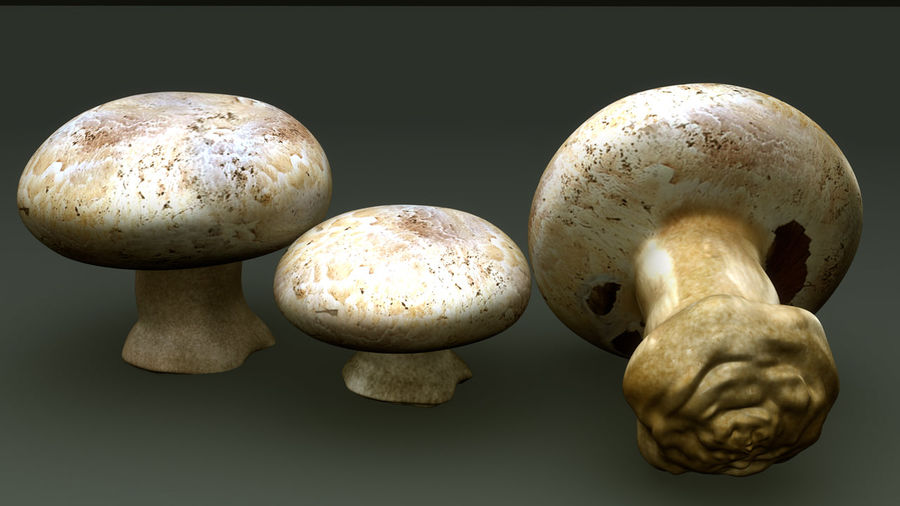 Agaricus Bisporus royalty-free 3d model - Preview no. 5