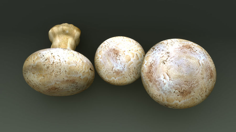 Agaricus Bisporus royalty-free 3d model - Preview no. 9