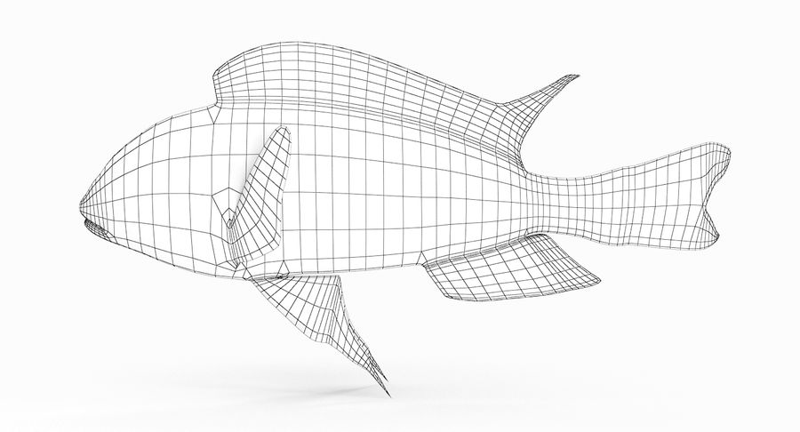 Simnochromis Diagramma Cichlid royalty-free 3d model - Preview no. 8