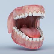 치아와 잇몸 3d model