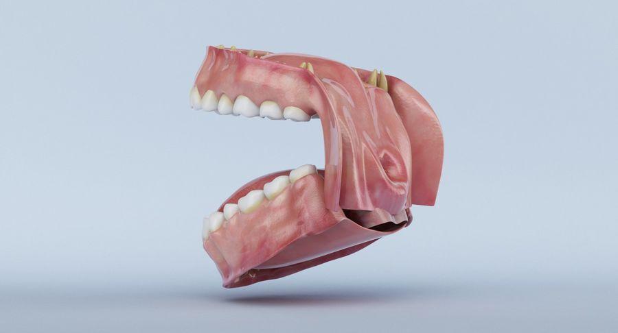 牙齿和牙龈 royalty-free 3d model - Preview no. 20