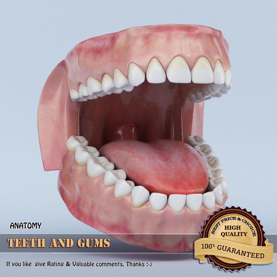 牙齿和牙龈 royalty-free 3d model - Preview no. 1