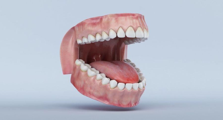 牙齿和牙龈 royalty-free 3d model - Preview no. 6
