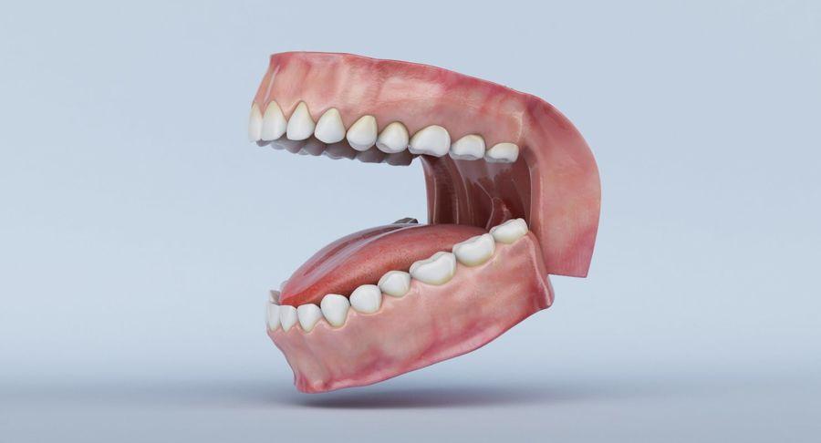 牙齿和牙龈 royalty-free 3d model - Preview no. 24