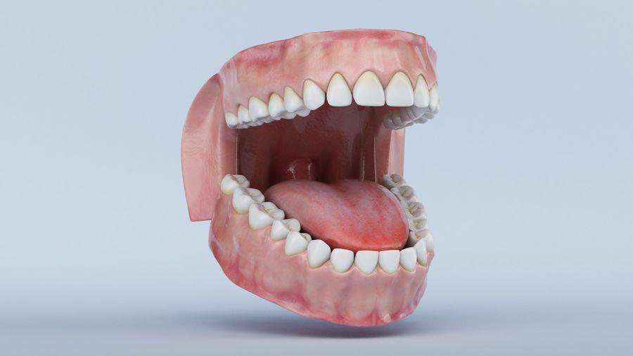 牙齿和牙龈 royalty-free 3d model - Preview no. 2