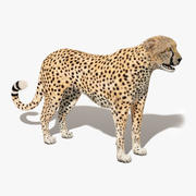 Cheetah (Fur) 3d model