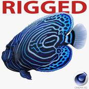 Juvenile Emperor Angelfish Rigged for Cinema 4D 3d model