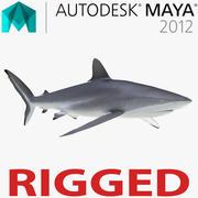 Шелковистая Акула, Оснащенная для Майя 3d model