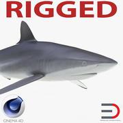 Шелковистая Акула Rigged для Cinema 4D 3d model