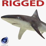 School Shark Rigged for Cinema 4D 3D Model 3d model