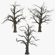 3 Old Dead Trees 3d model