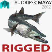 マヤのために装備されたバラクーダ魚 3d model