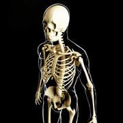 Szkielet i ludzkie ciało 3d model